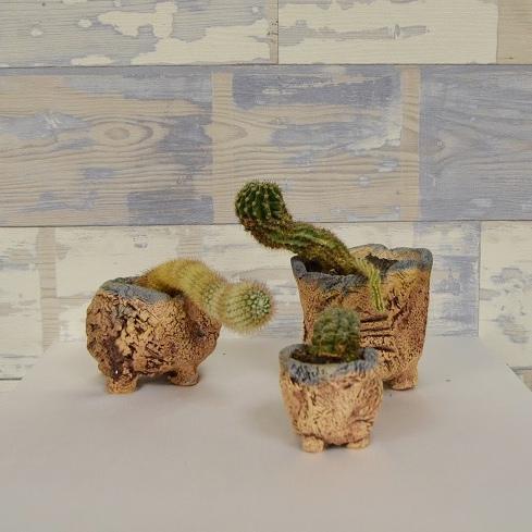 Горшочки для кактусов