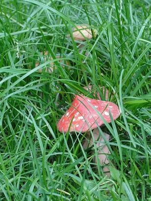 Керамические грибы